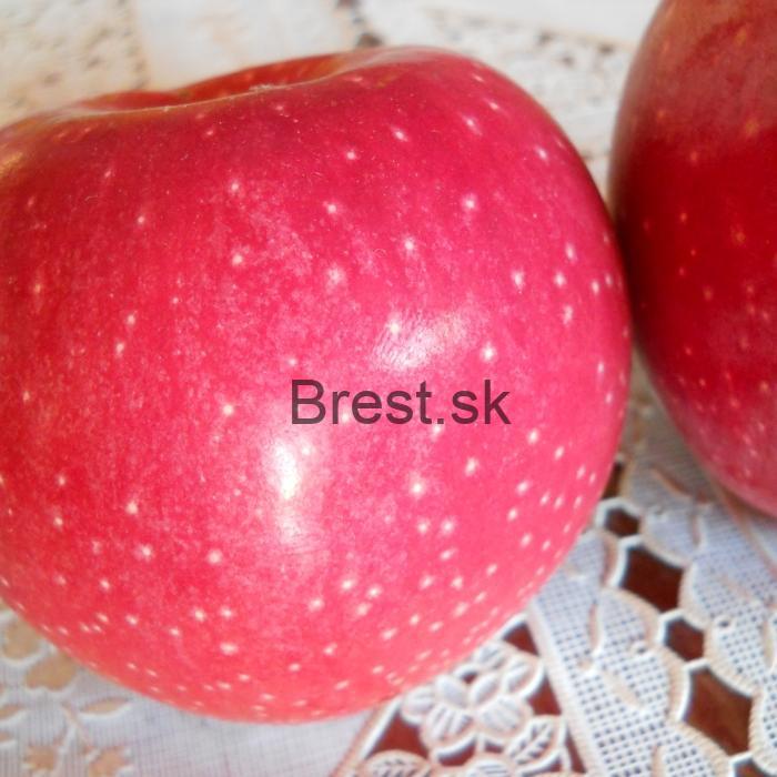 Jabloň florina